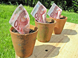 Euro in plant pot CC BY Images_of_Money